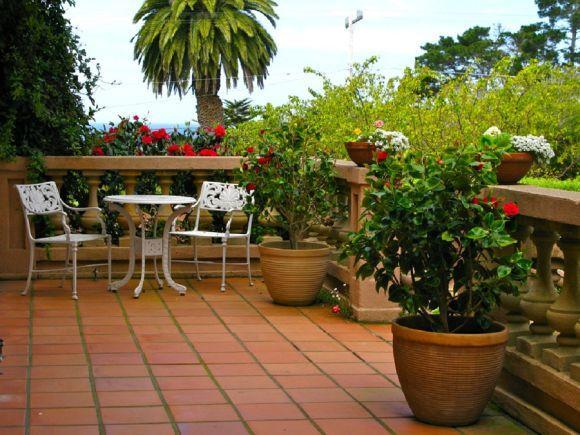 As plantas naturais não podem faltar no seu jardim (Foto Ilustrativa)
