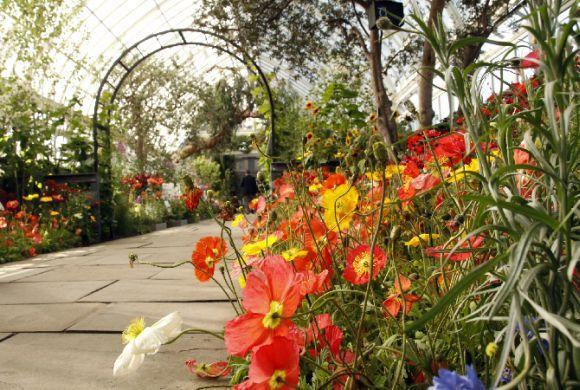 As cores nos jardins também são muito importantes (Foto Ilustrativa)