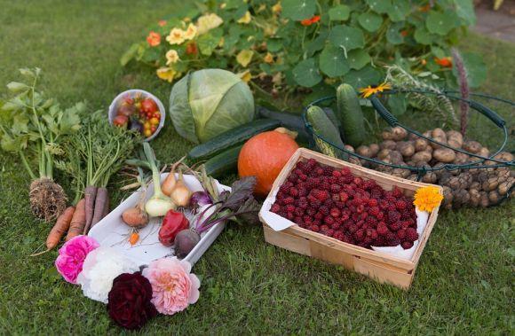 Cursos gratuitos online para fazer hortas caseiras