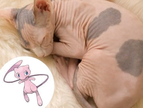 Mew (Gatos Sphinx) (Foto: Divulgação)