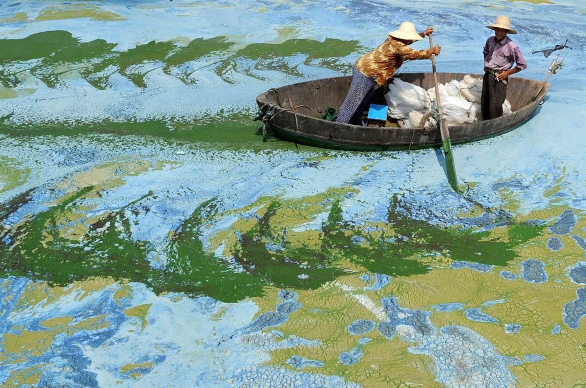 Pescadores remam um barco no Lago Chaohu, na China, cheio de algas (Foto: Divulgação)
