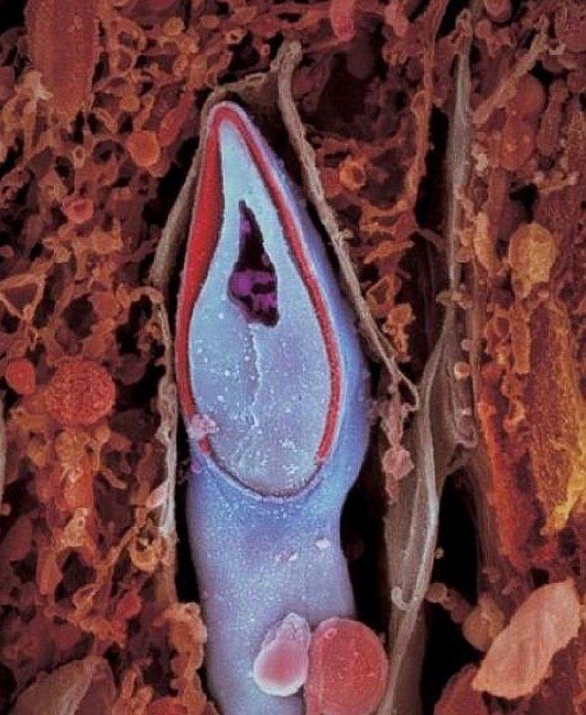 O momento exato na entrada do espermatozoide (Foto: Divulgação)