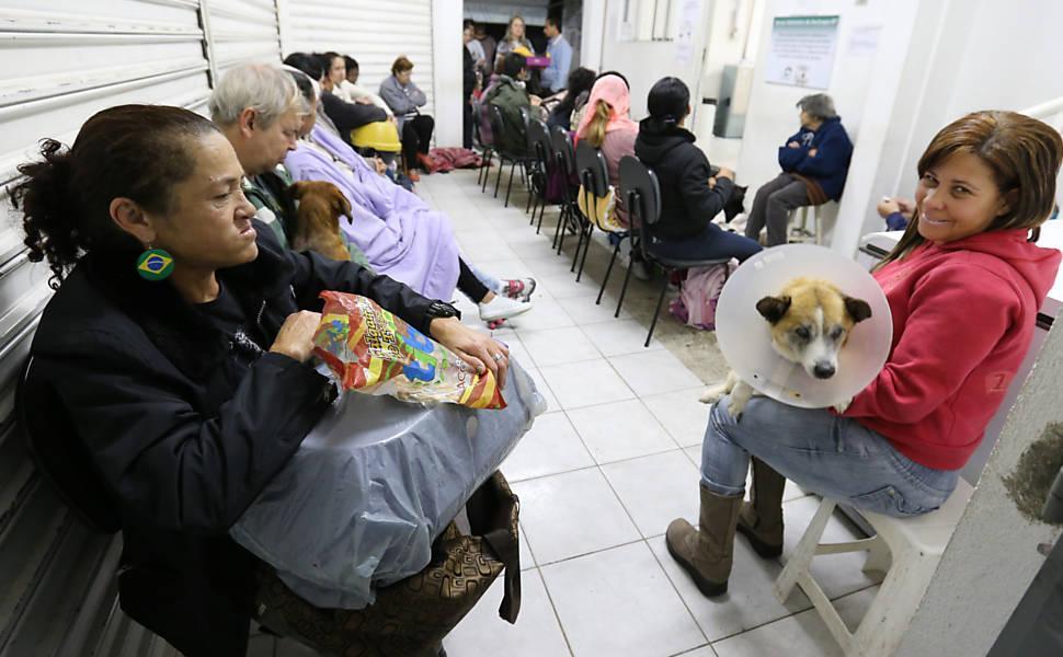 Hospital gratuito de animais em São Paulo ajuda milhares de pets por ano (Foto: Divulgação)