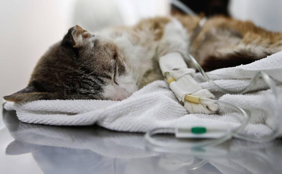 Veterinário gratuito Clínica Veterinária de baixo custo para todos os animais (Foto: Divulgação)