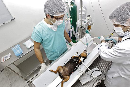 Veterinário gratuito Clínica Veterinária de baixo custo para todos os animais pelo País (Foto: Divulgação)