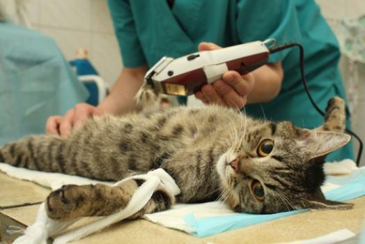 Cuide bem do seu animalzinho (Foto: Divulgação)