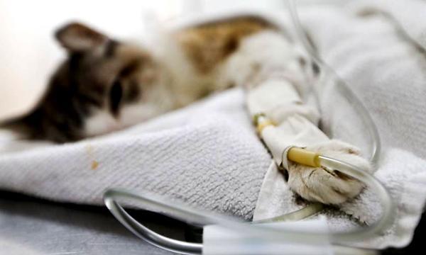 O veterinário gratuito pode salvar a vida do seu pet (Foto: Divulgação)
