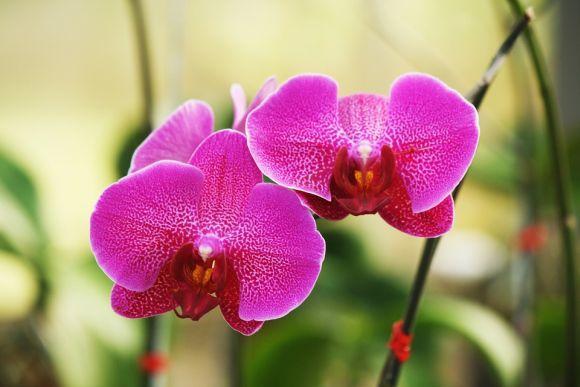 As orquídeas são uma opção sempre elegante (Foto Ilustrativa)