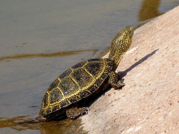 A independência das tartarugas combina com quem é do signo de Aquário (Foto Ilustrativa)