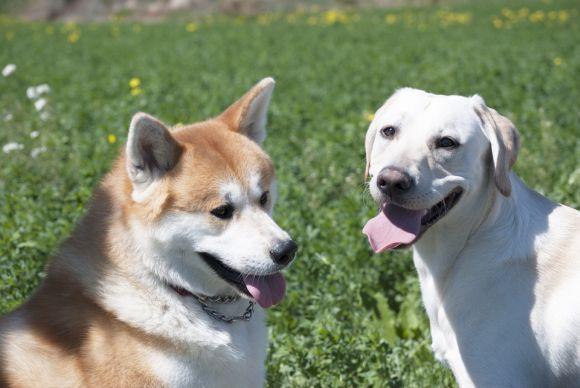 A escolha da raça de cachorro também pode levar em conta o seu signo (Foto Ilustrativa)
