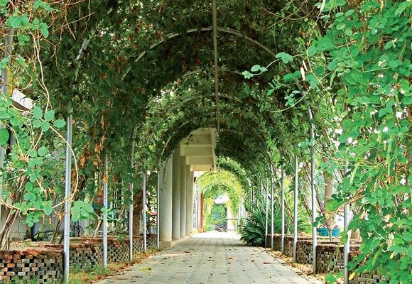 O pergolado pode te ajudar a ter um ambiente mais arborizado (Foto: Divulgação)