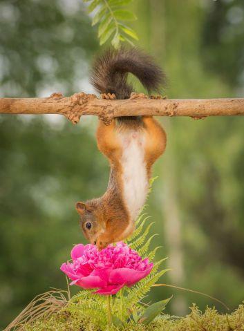 E quando o mundo para pra você apreciar aquele lindo dia? Nesse caso ele resolveu apreciar a flor (Foto: Divulgação)