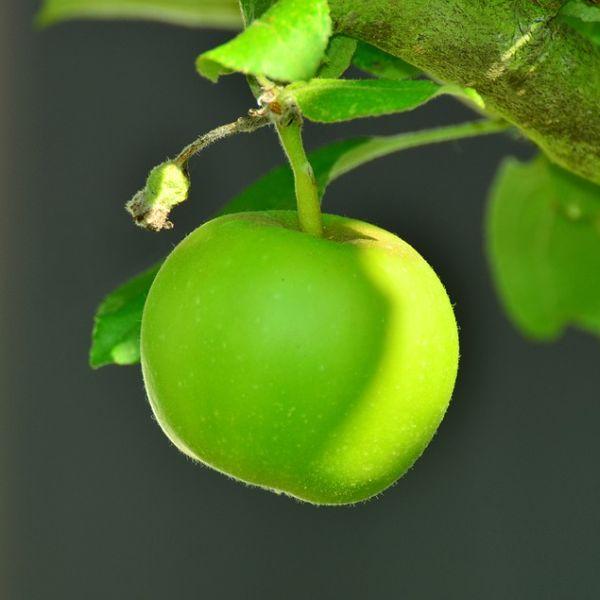 Benefícios da maçã na gravidez (Foto Ilustrativa)