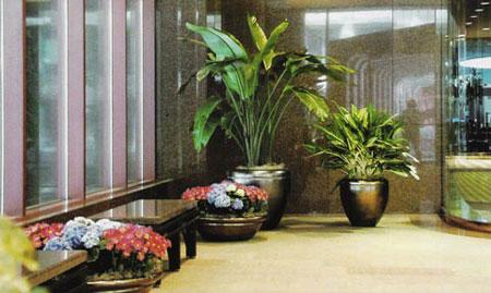 Decora o com plantas como fazer - Plantas para interior de casa ...