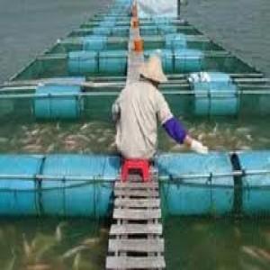 curso-de-engenharia-da-pesca