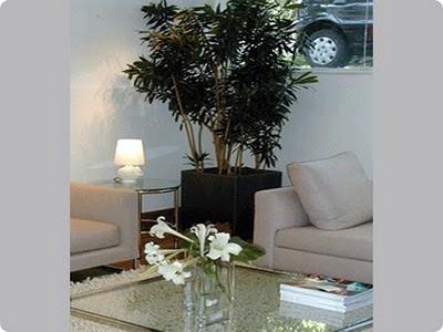 Plantas que ajudam acabar com a polui o em casa for Plantas para dentro de casa sombra