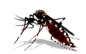 Eliminar água parada não é mais suficiente para combater o mosquito da dengue