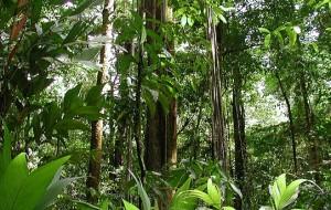 Amazônia está muito perto de não conseguir sobreviver, dizem estudiosos