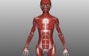 Site promove uma verdadeira aula de anatomia humana