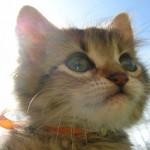 349572 12aaddfa78c4883af00f6c234d094d20 150x150 Os gatinhos mais fofos do mundo