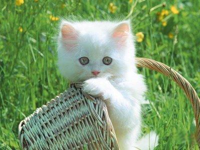 Gatinhos lindos papéis de parede gatos
