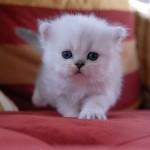 349572 fotos de gato 26 150x150 Os gatinhos mais fofos do mundo
