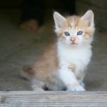 349572 fotos de gato 29 150x150 Os gatinhos mais fofos do mundo