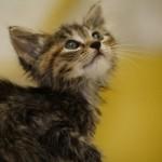 349572 fotos de gato 3 150x150 Os gatinhos mais fofos do mundo