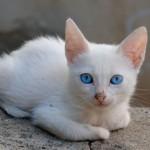 349572 fotos de gato 30 150x150 Os gatinhos mais fofos do mundo