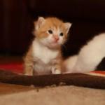 349572 fotos de gato 33 150x150 Os gatinhos mais fofos do mundo
