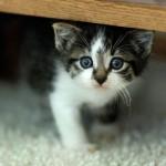 349572 fotos de gato 64 150x150 Os gatinhos mais fofos do mundo