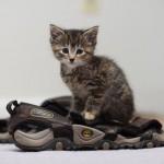 349572 fotos de gato 8 150x150 Os gatinhos mais fofos do mundo