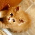349572 fotos de gato 97 150x150 Os gatinhos mais fofos do mundo