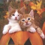 349572 gatos 007 150x150 Os gatinhos mais fofos do mundo