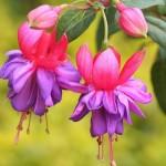349762 467246463 27751efa0e 150x150 Flores mais belas da natureza