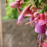 349762 brinco w 150x150 Flores mais belas da natureza