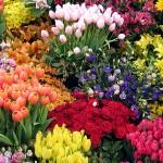 349762 flores 150x150 Flores mais belas da natureza