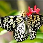 351429 borboleta 2 150x150 As borboletas mais lindas do mundo
