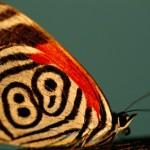 351429 borboleta 88 150x150 As borboletas mais lindas do mundo