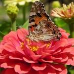 351429 foto flores e borboletas 02 150x150 As borboletas mais lindas do mundo