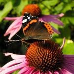 351429 foto flores e borboletas 03 150x150 As borboletas mais lindas do mundo