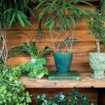 355134 Sacadas decoradas com plantas fotos 4 150x150 Sacadas decoradas com plantas: fotos