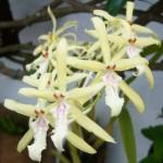 356846 2284332319 6da1b3aae4 o 150x150 As orquídeas mais bonitas da natureza