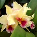 356846 285703629 24f6b1c77d 150x150 As orquídeas mais bonitas da natureza