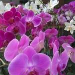 356846 6cb366f510 11 4okok 150x150 As orquídeas mais bonitas da natureza