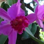 356846 LJ130910A 150x150 As orquídeas mais bonitas da natureza