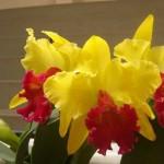 356846 ORQUIDEAS UMA BOA OCUPACAO 150x150 As orquídeas mais bonitas da natureza