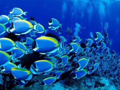 357044 No Fundo Do Mar 2 150x150 As Belezas Do Fundo Do Mar Fotos