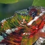 371966 as cores fortes e o colorido servem também para a comunicação alé de se camuflar 150x150 Animais que se camuflam na natureza: fotos