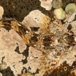 371966 até no fundo do mar há necessidade de camuflagem 150x150 Animais que se camuflam na natureza: fotos